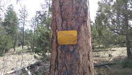 Jacks Canyon Road - Waypoint 5: Dead tree & sign