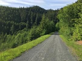 Midnight Creek / NF Road 7010 - Waypoint 4: Vista View