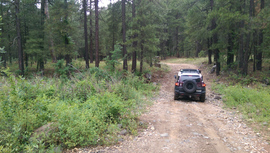 Fry Canyon Trail - Waypoint 5: Woody Wash