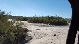 Mojave Road - Waypoint 68: Manix Wash