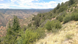 Casner Mountain Trail - Waypoint 5: Sycamore Canyon