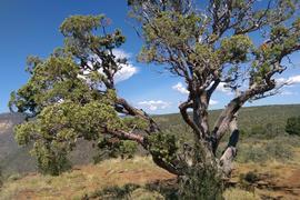 Rocky Sidewinder / 153A - Waypoint 13: Schnebly Hill Vista Campsite
