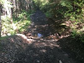 Evans Creek / Trail #102 - Waypoint 3: Creek Crossing