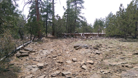 Jacks Canyon Road - Waypoint 5: Dead tree & sign