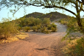 Millsite Canyon Trail - Waypoint 2: STAY LEFT FR1900