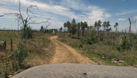 Casner Mountain Trail - Waypoint 1: Jerome Rd. / 538B & 6271 Intersection