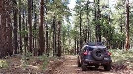 Turkey Butte Lookout Loop - Waypoint 3: Easy Eastern Hill