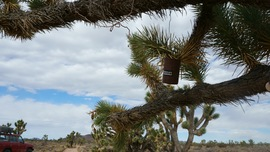 Mojave Road - Waypoint 32: Penny Can Tree