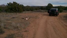Camping & Lodging: Oak Creek Homestead - Cottonwood, Arizona