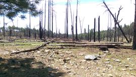 Camping & Lodging: Jerome Road - Kachina Village, Arizona