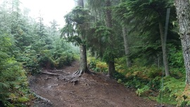 Elbe Hills OHV - Mainline Extension Trail - Elbe, Washington