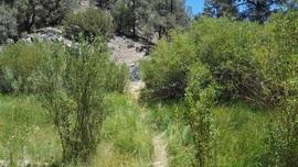Yellow Jacket Trail (Lower) / 20W24 / 126 - Frazier Park, California