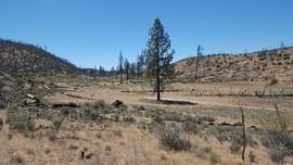 Yellow Jacket Trail (Upper) / 20W24 / 126 - Frazier Park, California