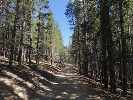 Bill Moore To Mill Creek Cut Off - Empire, Colorado