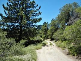 4S01A - Hall Decker - Idyllwild-Pine Cove, California