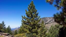 2N93F  - Wildhorse - Big Bear City, California