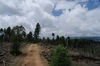 Trip Report: Jerome Road - Kachina Village, Arizona