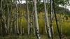 Trip Report: Aspen Ridge - Johnson Village, Colorado